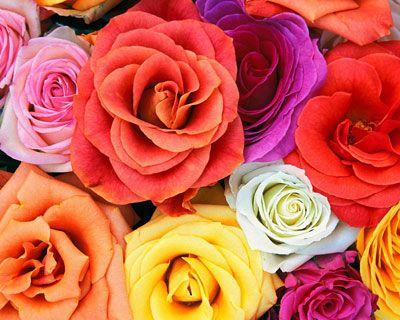 Идея онлайн магазин домашних цветов