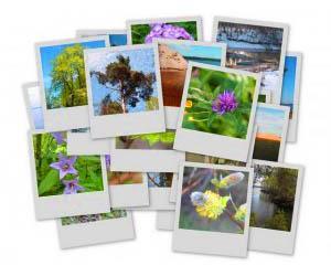 цифровой фотобанк