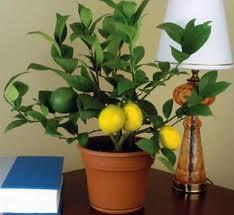 Бизнес на лимонных деревьях