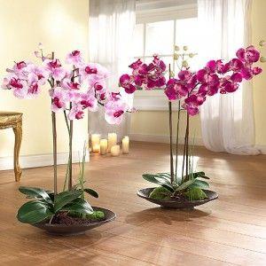 Выращивание орхидей: и доход, и удовольствие