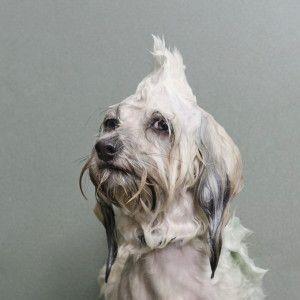 wetdog1