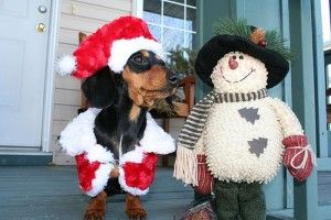 suicidal_christmas_dogs_08